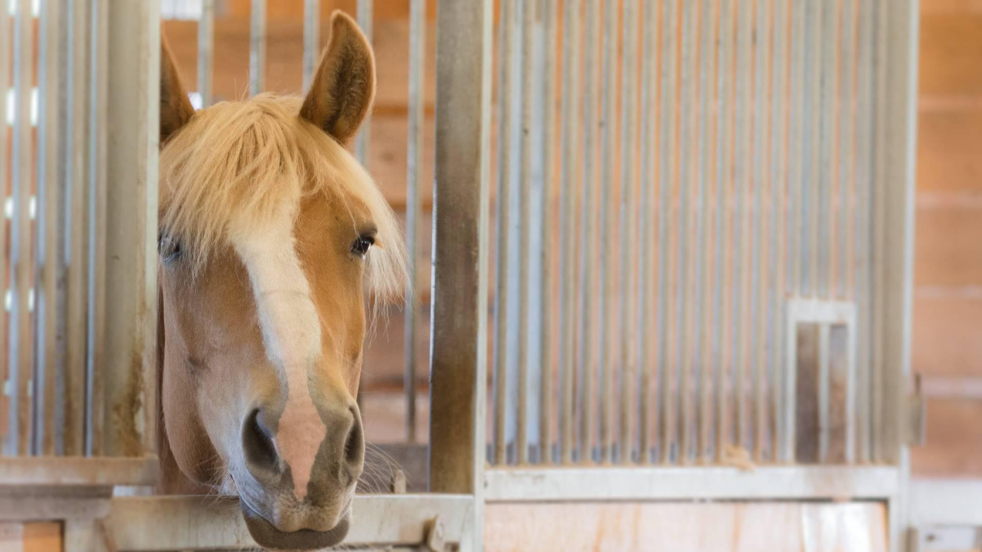 hevonen osaa valita palkkion