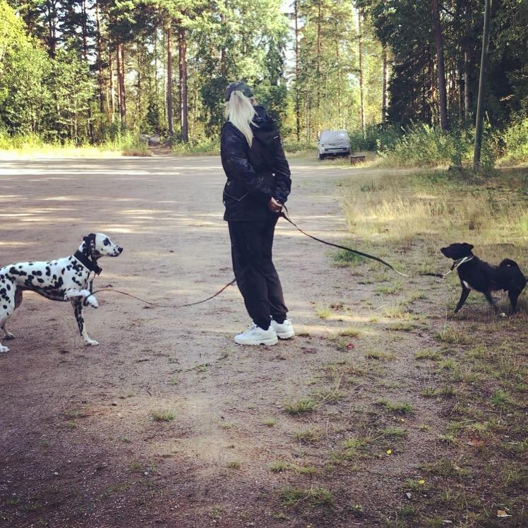 kaksi koiraa hihnassa