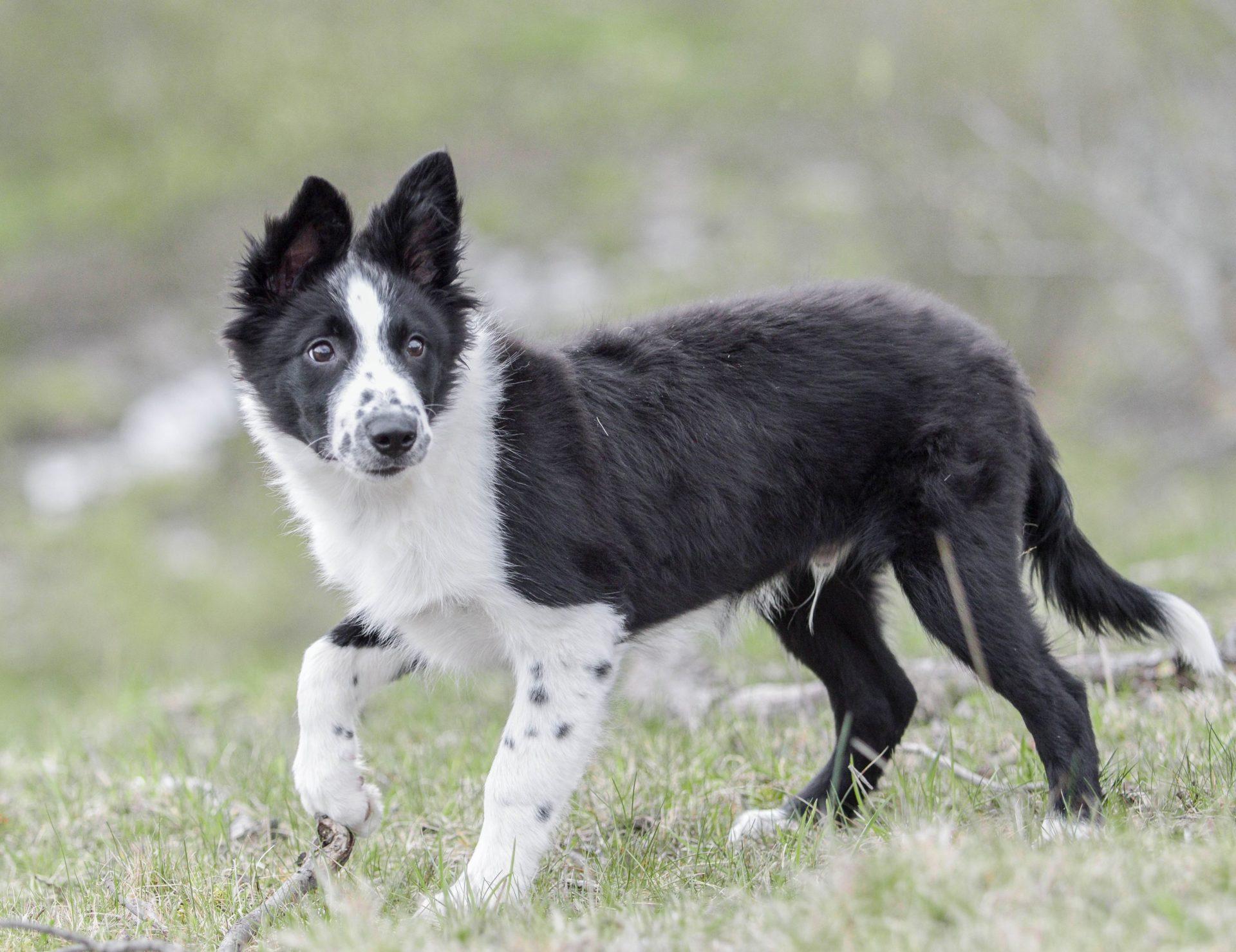 nuori koira katselee pelokkaana ympärilleen