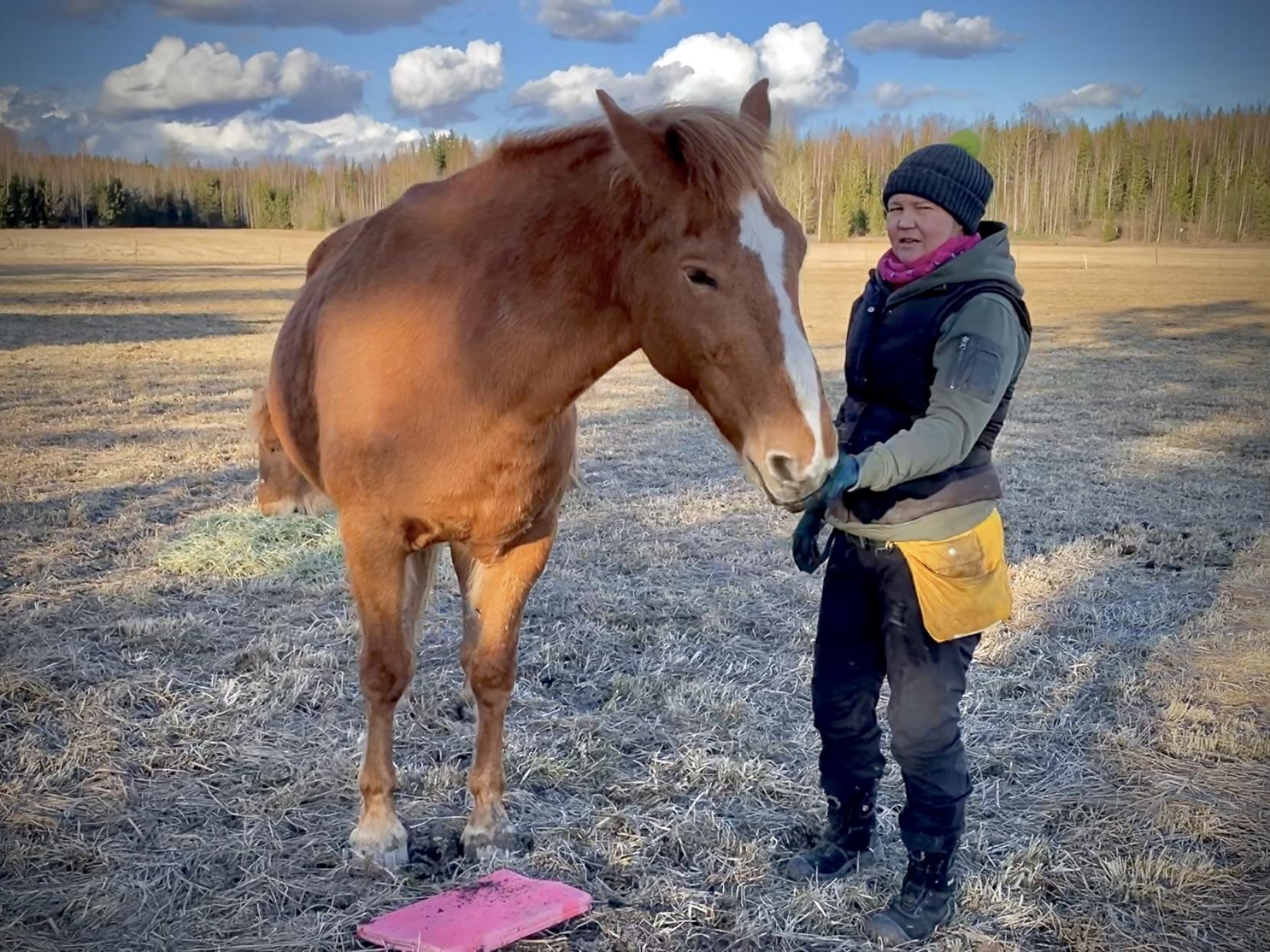 hevosen kohdeharjoittelu