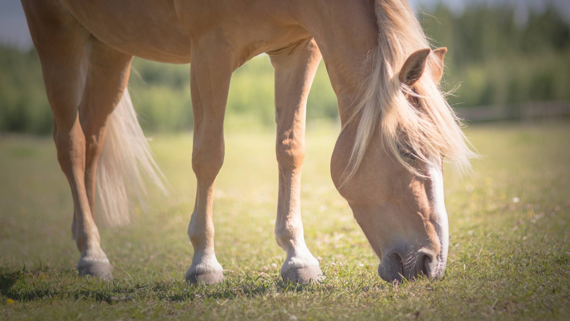 hevonen ei pysy paikoillaan